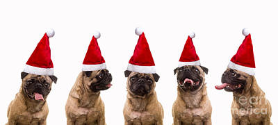 Sing Photograph - Christmas Caroling Dogs by Edward Fielding