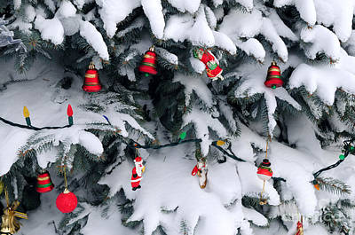 Fir Photograph - Christmas Decorations In Snow by Elena Elisseeva