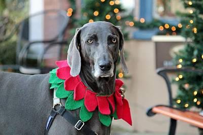 Companion Digital Art - Christmas Dog by Cynthia Guinn