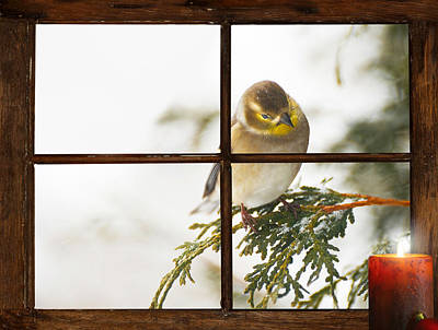 Christmas Goldfinch. Print by Kelly Nelson