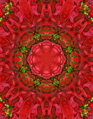 Christmas Kaleidoscope Iv Print by Dawn Currie