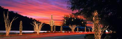 Holiday Cacti Photograph - Christmas, Phoenix, Arizona, Usa by Panoramic Images