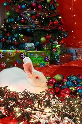 Photograph - Christmas Rabbit by Amanda Stadther