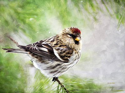 Rollo Painting - Christmas Redpoll by Christina Rollo