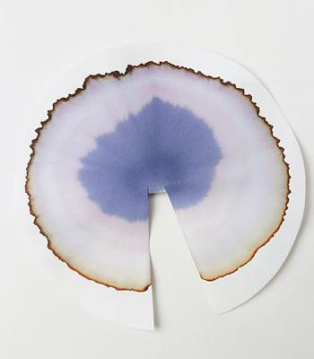 Water Filter Photograph - Chromatography Experiment by Dorling Kindersley/uig