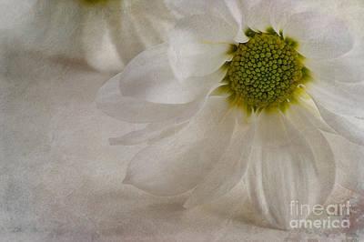 Chrysanthemum Textures Print by John Edwards