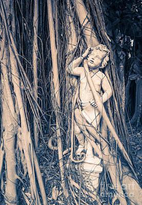 Strangler Fig Photograph - Cherub by Edward Fielding