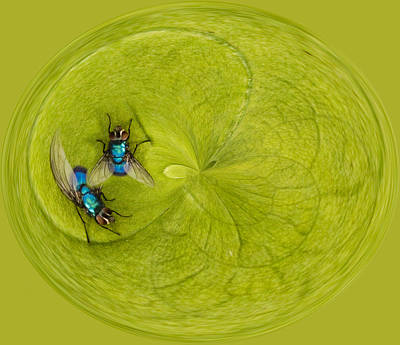 Circle Of Flies Print by Jean Noren