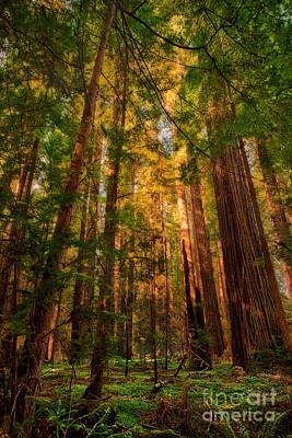 California Redwood Photograph - Circle Of Light - California Redwoods by Dan Carmichael