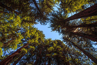 Forest Photograph - Circle Of Redwoods by Troy  Snider