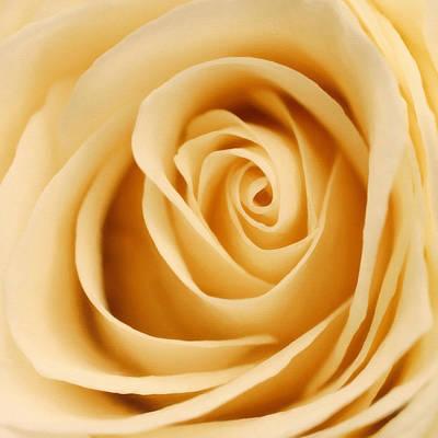 Flower Photograph - Circles Of Love by Georgiana Romanovna
