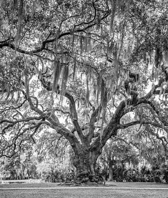 Path Photograph - City Park Live Oak Bw by Steve Harrington