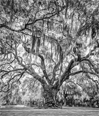 Path Photograph - City Park Live Oak - Paint Bw by Steve Harrington
