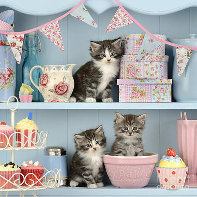 Bunting Photograph - Baking Shelf Kittens by Greg Cuddiford