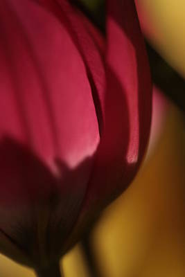 Mystifying Photograph - Claret by Connie Handscomb