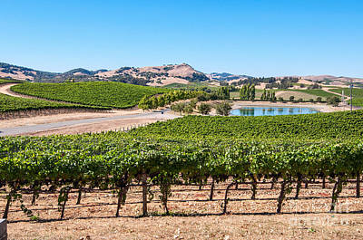 Classic Napa - Cuvaison Winery And Vineyard In Napa Valley. Print by Jamie Pham