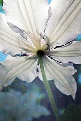 Stamen Digital Art - Clematis In Morning Sun by Michelle Calkins