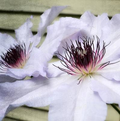 Stamen Digital Art - Clematis In Spring by Michelle Calkins