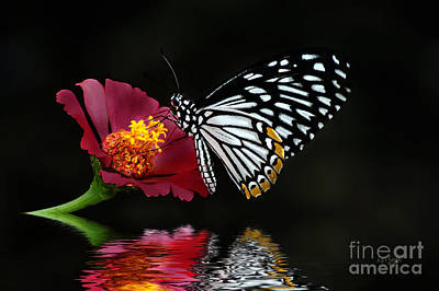 Butterfly Digital Art - Cliche On Burgundy by Lois Bryan