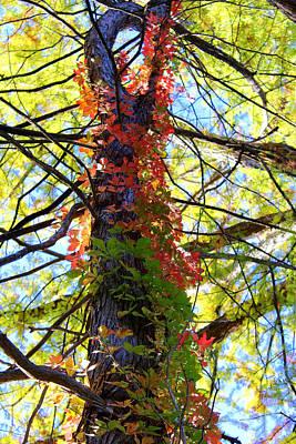 Warner Park Photograph - Climbing Red by Laurette Escobar