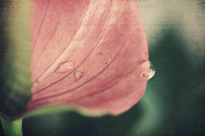 Anthurium Photograph - Close To Falling by Laurie Search