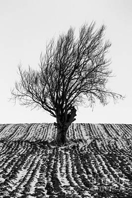 Close Tree In Snow Print by John Farnan