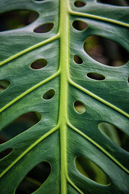 Close Up Of A Green Leaf With Holes Print by Scott Mead