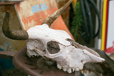Junk Photograph - Close Up Of An Old Cow Skull by Julien Mcroberts