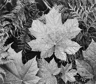 Montana Digital Art - Close Up Of Leaves by Ansel Adams