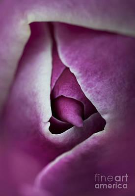 Close Up Of Purple Magnolia Flower Print by Jaroslaw Blaminsky
