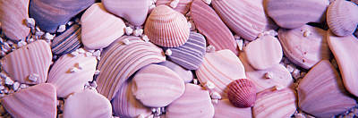 Large Group Of Objects Photograph - Close-up Of Seashells by Panoramic Images