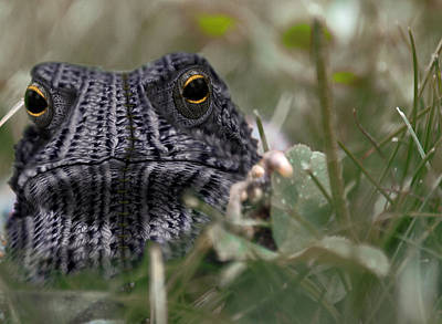 Manipulated Photograph - Clothed Toad by Paul Geilfuss