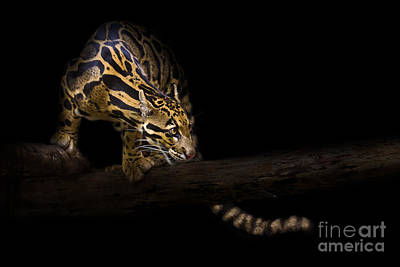 Striking Photograph - Clouded Existence by Ashley Vincent