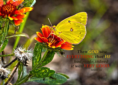 Cloudless Sulphur Butterfly And Scripture Print by Sandi OReilly