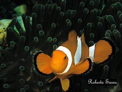 Clown Fish Print by Roberta Sassu