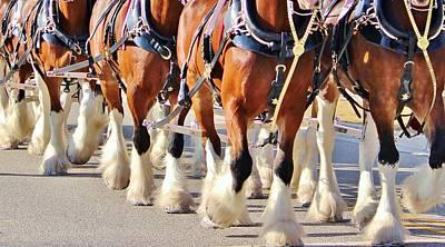 Purebred Digital Art - Clydesdale Horses Walking by Cynthia Guinn