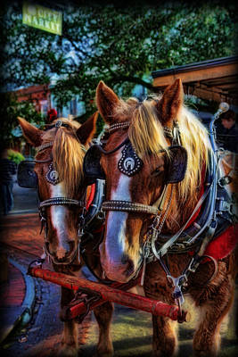 Clydesdales - Want A Ride Print by Lee Dos Santos