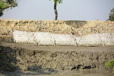 Coastal Flood Defences In The Sunderbans Print by Ashley Cooper
