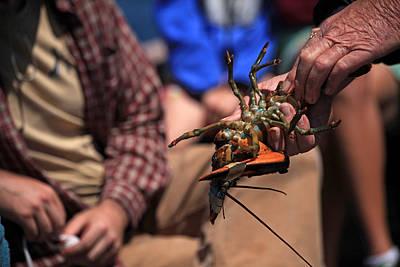 Coastal Maine Is Lobster Print by Karol Livote