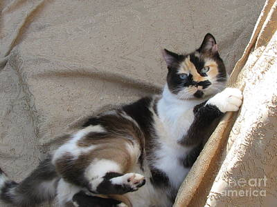 Of Calico Cats Photograph - Coat Of Many Colors  Silktapestrycatstm by Pamela Benham