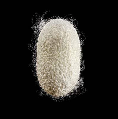 Cocoon Photograph - Cocoon Of Silk by Science Photo Library