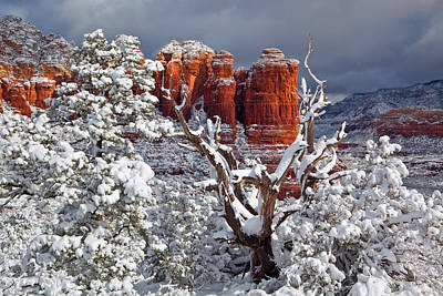 Coconino National Forest Photograph - Coffee With Sugar by Guy Schmickle