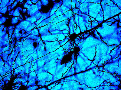 Cajal Mixed Media - Colaterales Dark by Tyler Sloan