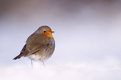 Coastal Birds Photograph - Cold Feet by Roeselien Raimond