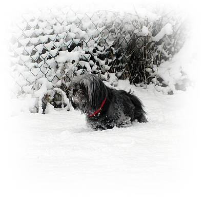 Dog In Snow Photograph - Cold Feet by Sharon Lisa Clarke
