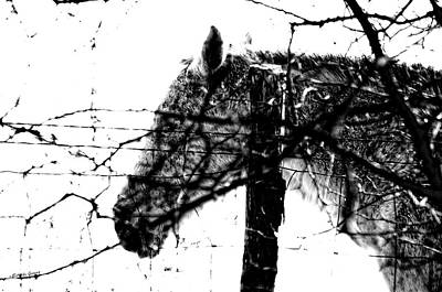 Animal Photograph - Cold Horse by Erich Grant