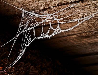 Cold Web Print by Odd Jeppesen