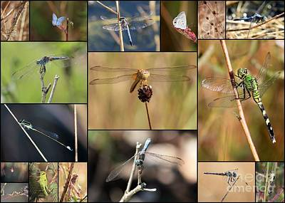 Grasshopper Photograph - Collage Marsh Life by Carol Groenen