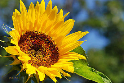 Color Me Happy Sunflower Print by Christina Rollo