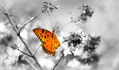 Flutter Photograph - Color Splash by Shelby  Young